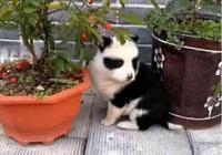田園犬意外懷孕,生下一隻熊貓狗,狗:我也是國寶了!