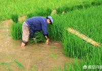 現在農村的年輕人都不會種田了,等這一代農民老了,那些田該怎麼辦?