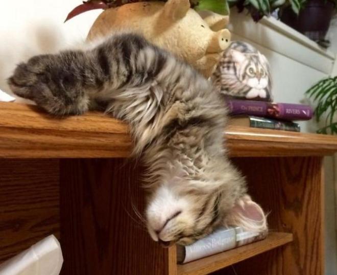 睡端正點不好嗎?10張睡相超逗的寵物照片讓人忍不住笑了
