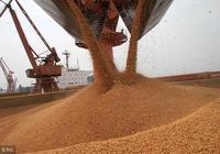 中國不買了,美國大豆又面臨更殘酷的打擊,豆農被特朗普害慘了!