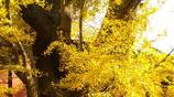 北平之秋就是人間的天堂:20張照片告訴你北京的秋天究竟有多美!