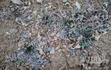 濟南二月山野挖回來的,做成湯味道鮮美如春天,你知道是啥嗎?