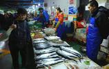 第一波春鮁開始上市了 丈人開始笑了 鮁魚價格將逐漸被推高