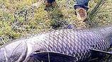 秋季草魚怎麼釣?看釣魚大師怎麼說,掌握這一步,你也能每天爆護