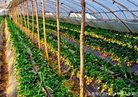 農村創業——在農村不起眼的賺錢門路