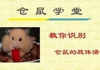 倉鼠學堂 教你識別倉鼠的肢體語言