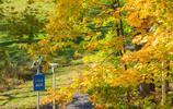 圖蟲人文攝影:賓夕法尼亞州大學,校園秋色