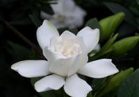 這4種花春天扦插正合適,剪個枝扔水裡,冒根就能成盆栽!