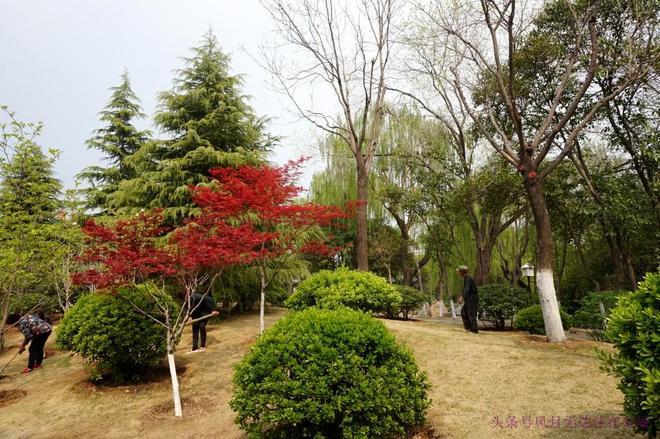 五龍潭公園裡春光美