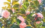 煙花四月,花的芬芳瀰漫人間,太美了