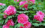 不管有錢沒錢,建議:家裡定要養這6種盆栽,花開滿屋都飄香