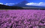 最大的薰衣草基地:中國95%的薰衣草都來自這裡,銷往世界各地