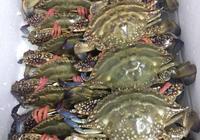 台州的梭子蟹跟舟山的梭子蟹哪個更好吃?