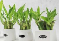 家裡科學擺放綠色植物的風水建議,你一定會用到
