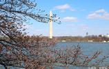 初春的美國首都華盛頓,乍暖還寒