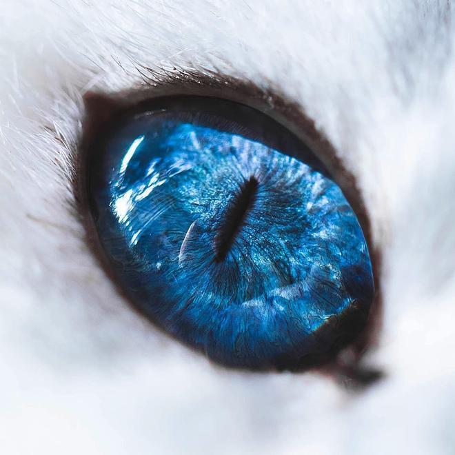 這隻貓的眼睛實在是太美了,只看一眼就深深著了魔