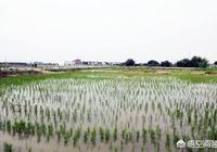 為了提高農民種地收入,水稻收購價格提高到2.5元/斤,零售價4元/斤,你能接受嗎?