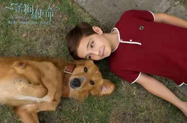 《一條狗的使命》:一條狗用自己的四世輪迴,教會人們活著的意義