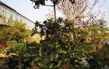 自家農村小院種上這些樹,美極了,陋室也可以變成桃源