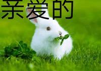 竹有虛心節節高;詠竹,你能來一首嗎?