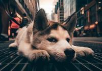 狗老關在家裡會怎麼樣?有什麼危害?
