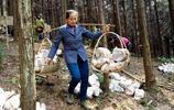 """村民比賽種靈芝,""""靈芝王""""捧著靈芝在樹林挖坑引發圍觀"""