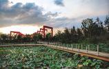 昔日揚州汙染最嚴重的地區,如今變成了最美的花園,而且完全免費