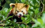 千姿百態的動物特寫,自然生態攝影師鏡頭下的奇趣自然