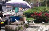 東莞塘廈觀光公園,在塘廈打工的人們週末都喜歡來這裡玩