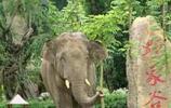 西雙版納-熱帶雨林自然保護區