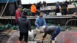 """初冬逛青島碼頭 海鮮種類多 價格可還價 買200元鯧魚還送""""贈品"""""""
