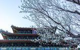 北京已變身花的海洋,別再宅在家裡了!