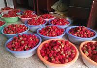 現在的農村,是種水果蔬菜賺錢,還是種藥材賺錢多?
