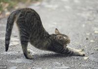 闢謠:無良鏟屎官拋棄貓咪的理由有千百種,但大多數都很幼稚可笑