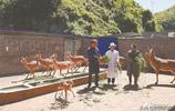 貴州納雍:姜遠平用養鹿帶動更多群眾脫貧致富
