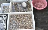江蘇連雲港:海貨引搶購,白蛤蜊賣5元一斤,有一種需特別注意
