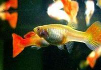 從小玻璃魚缸養魚失敗到把觀賞魚養到爆缸,看看這位魚友的經歷!