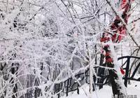 春雪已下完,未來幾天溫度接近10度,你準備去哪裡尋找春天呢?