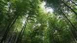 旅遊圖集:溧陽南山竹海,呼吸新鮮空氣,欣賞美麗的竹林
