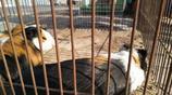 農村大集寵物市場上一種從沒見過的動物,40一隻,差點鬧出笑話來