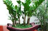 這9種綠植能招財進寶,客廳一定要放一盆,包你悶聲發大財!