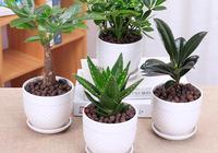 聽說這6種植物有毒!再喜歡也別隨便養,快看看你家有沒有