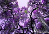 新年,紫氣東來,好運一整年!(太美了)