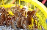 開春來青島吃海鮮看大海 扇貝10元2斤海捕蠣蝦18 包餃子妥妥鮮