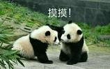 超可愛大熊貓表情包,讓你成為朋友圈最萌的仔!