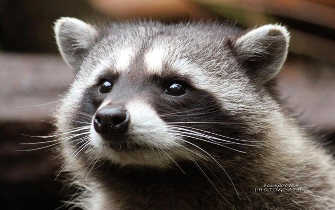 動物圖集:精選動物