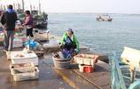 在臺灣對面,凌晨4點的漁港碼頭,遍地海鮮便宜的跟不要錢一樣!