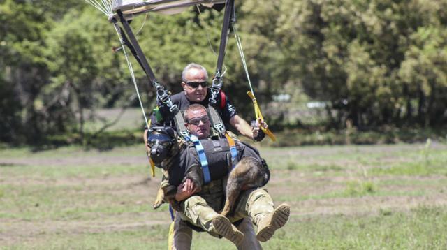 牧羊犬高空跳傘抓小偷,並創造了牧羊犬高空跳傘的吉尼斯世界紀錄