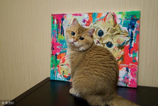 十橘九胖?這隻在ins上有50萬粉絲的橘貓,大眼睛胖嘟嘟萌翻了!