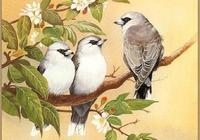 """鶯啼燕鳴子規聲聲,以《菩薩蠻》為例,細說溫庭筠的""""禽鳥情節"""